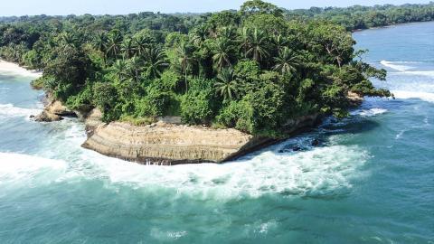 Гвинеи