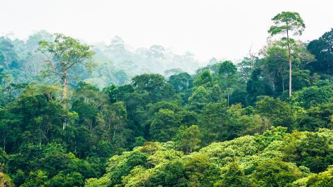 Национальный парк Серро Кора